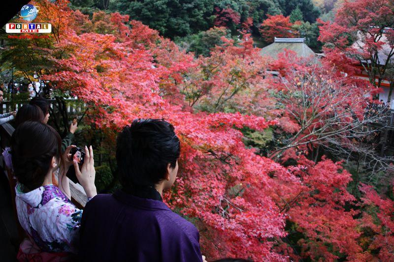 &nbspOutono no Kiyomizu-dera: passeio em um dos pontos turísticos mais visitados de Quioto
