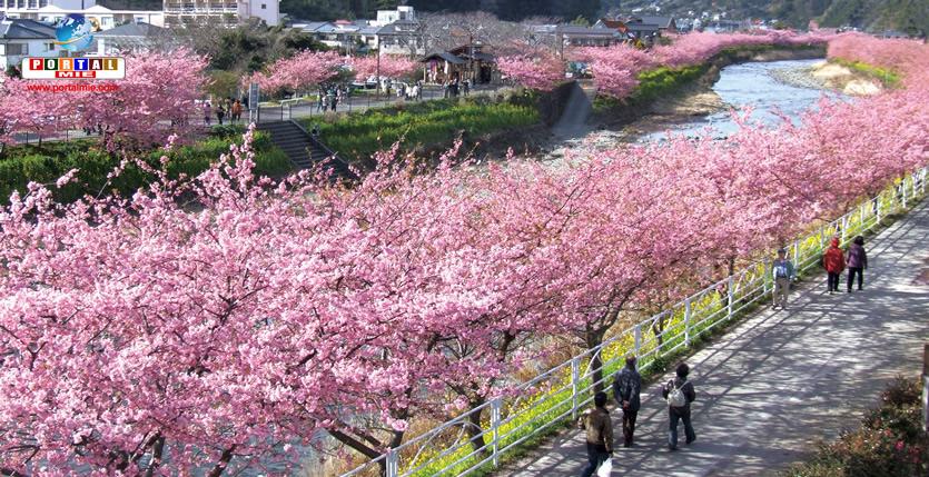 &nbspLa belleza del sakura ya llegó en la ciudad de Shizuoka
