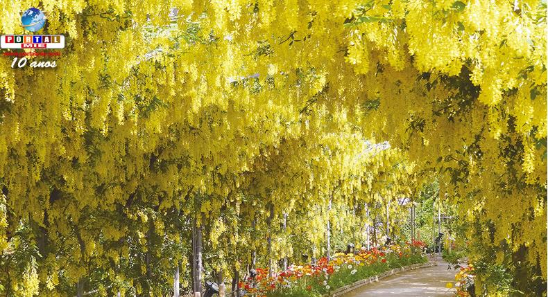 &nbspDica de passeio: o belo e famoso Festival de Glicínias em Tochigi