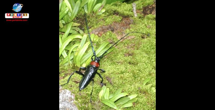 &nbspEspécie de besouro ameaça a vida das cerejeiras no Japão