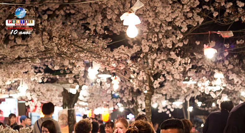 &nbspYozakura: a beleza das flores de cerejeira durante a noite