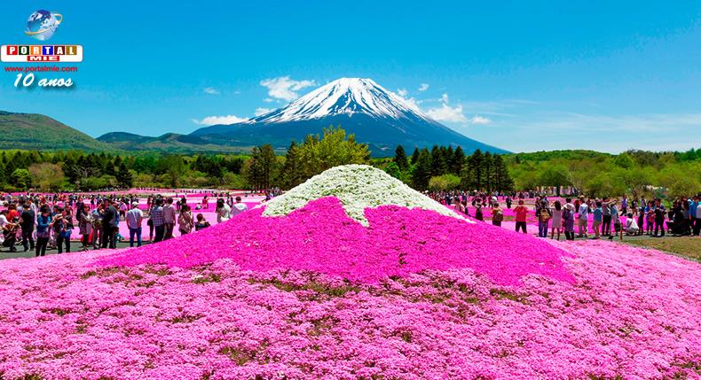 &nbspFuji Shibazakura Festival 2017