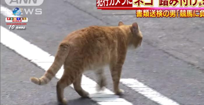 &nbspHomem é preso por pisar e matar gatos em Nagoia