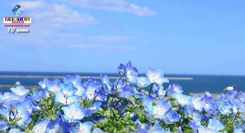 &nbspDica de passeio: Parque Hitachi Seaside e seu encantador carpete de flores