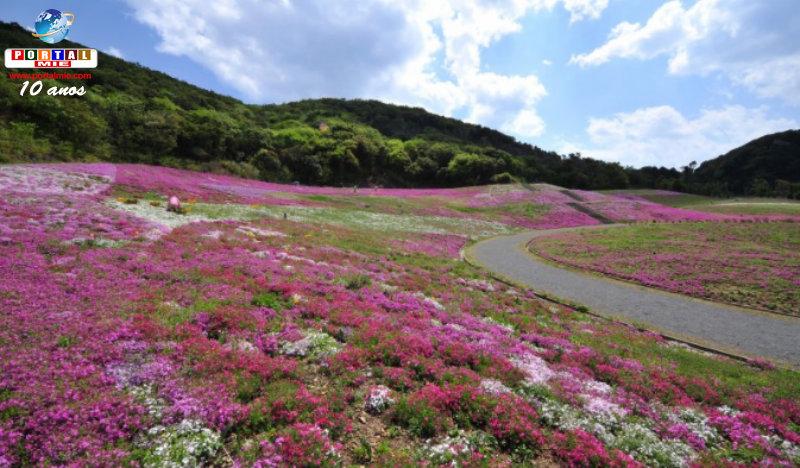 &nbspIncrível tapete colorido de flores que vão do branco ao vermelho (vídeo)