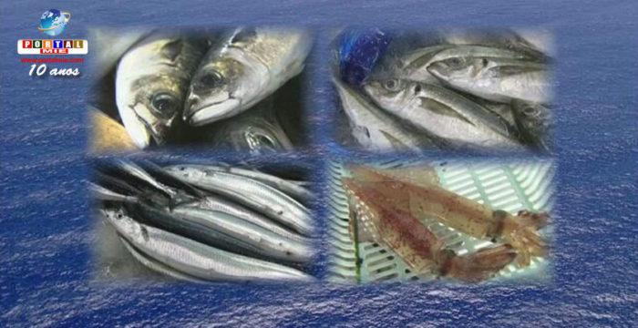 &nbspSaiba tudo sobre Anisakis, o parasita que causa infecções associadas ao consumo de peixe cru