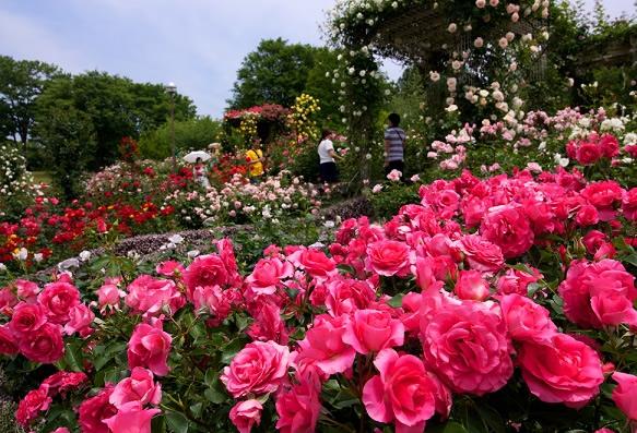 &nbspFestival das Rosas no Gunma Flower Park