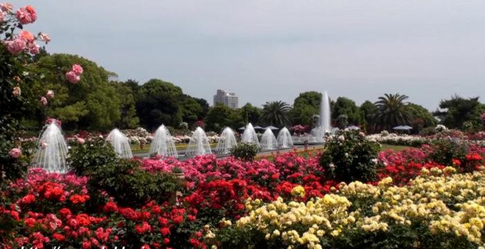 &nbspFestival das Rosas no Parque Suma Rikyu