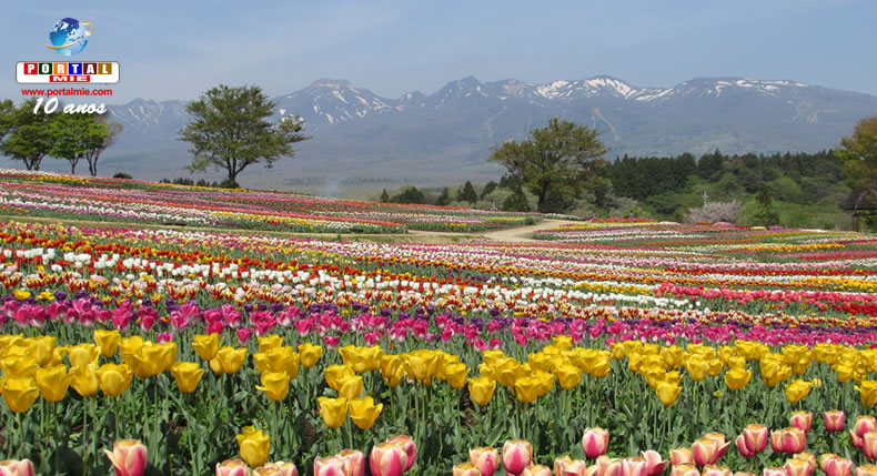 &nbspTulipas estão no auge da floração em parque de Tochigi