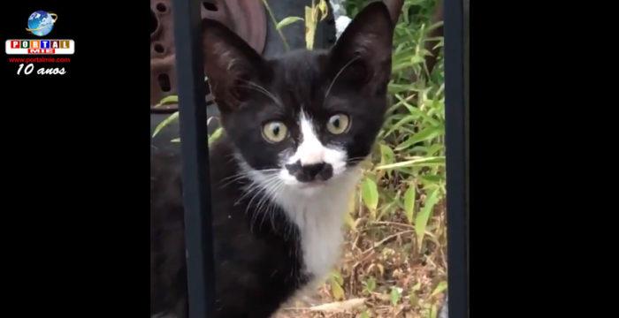 &nbspGato com 'silhueta de gato' no nariz vira hit na Internet no Japão