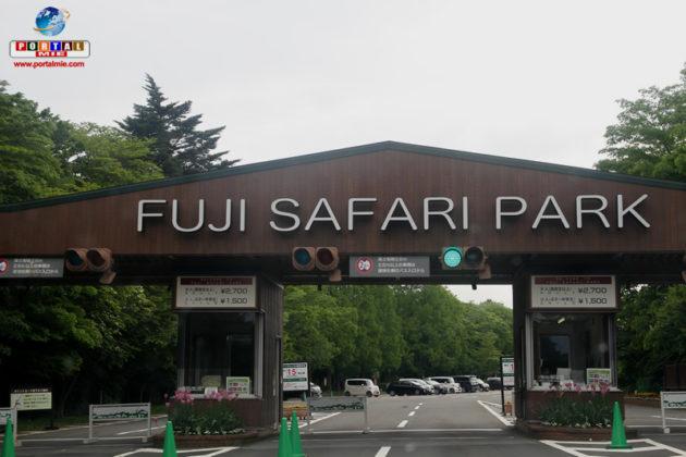 &nbspDica de passeio: Fuji Safari Park em Shizuoka