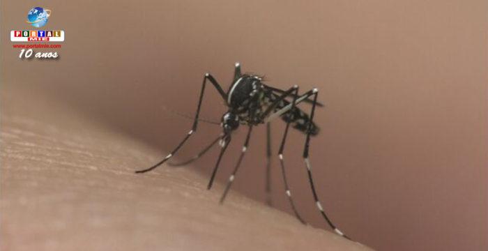 &nbspQuais os tipos de pessoas mais picadas por mosquitos?