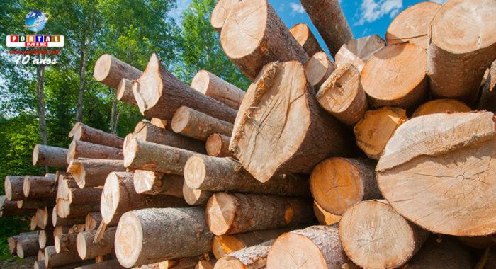 &nbspJapão estuda o uso da polpa de madeira para fabricação de peças mais leves para automóveis