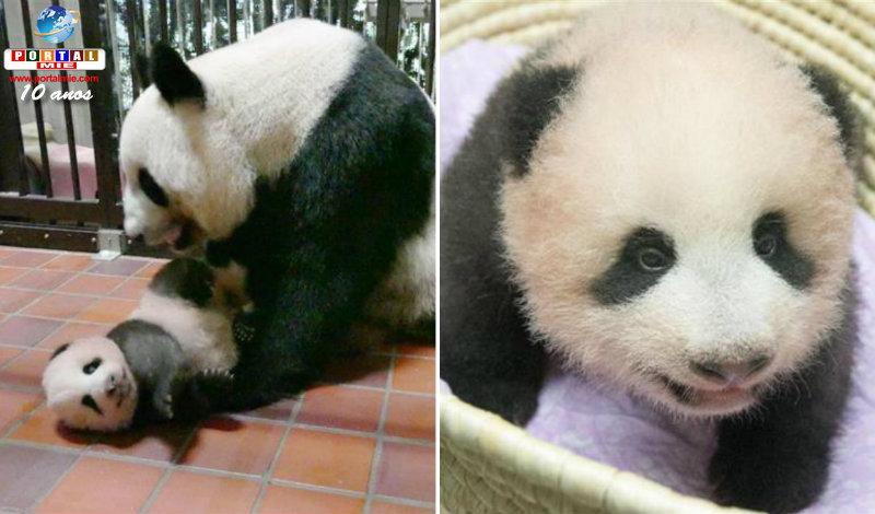 &nbspBebê panda de 3 meses cresce saudável
