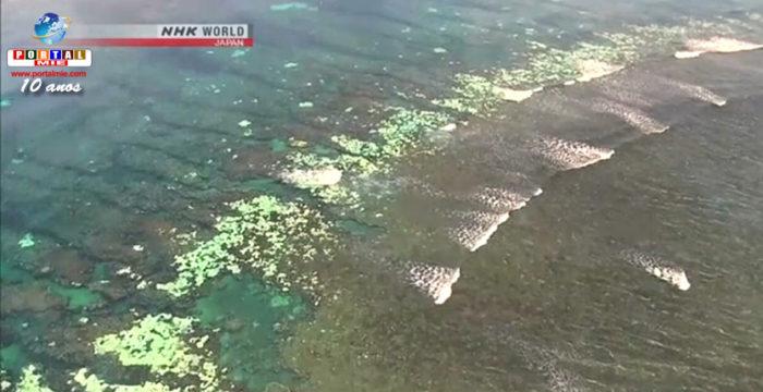 &nbspSetenta por cento dos recifes de corais de Okinawa estão mortos