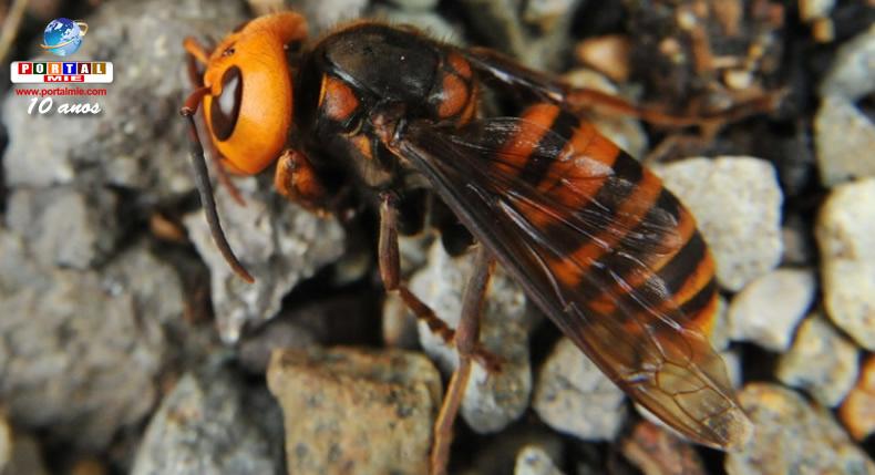 &nbspMulher morre após ser atacada por vespas