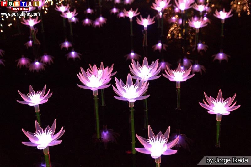 12-11-2017 Flower Park dest (2)