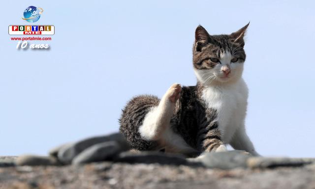 &nbspIlha dos Gatos em Fukuoka é considerada um dos maiores pontos turísticos para amantes dos felinos