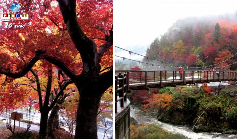 &nbspParque de Toyota está com colorido de outono