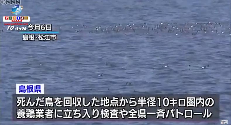 &nbspVírus altamente patogênico da gripe aviária é detectado em Shimane