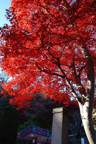 &nbspConfira alguns locais em Saitama para apreciar a beleza das cores do outono