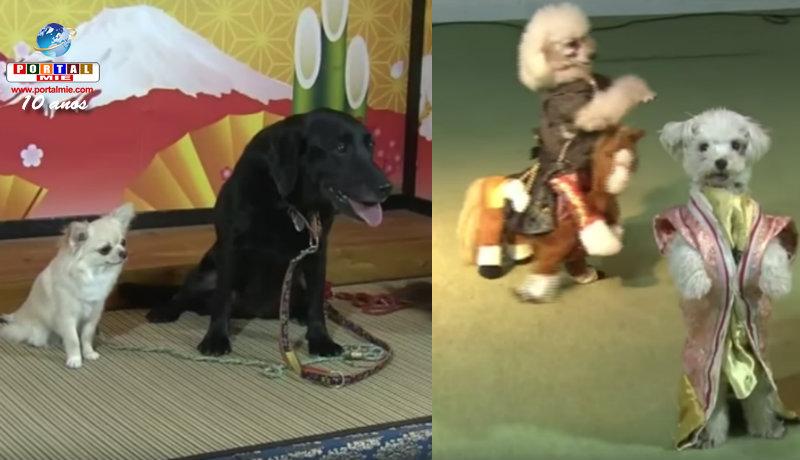 &nbspZoológico Wan Wan em Aichi cheio de eventos para o Ano do Cachorro