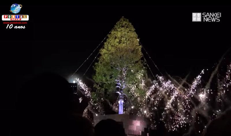 &nbspKobe se ilumina com o pinheiro de Natal natural mais alto do mundo