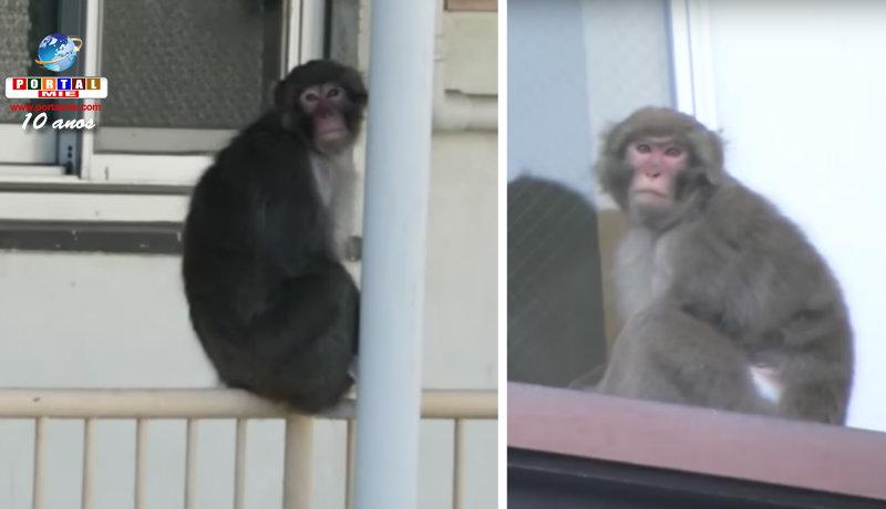 &nbspPolícia alerta para o macaco perdido em Nagoia
