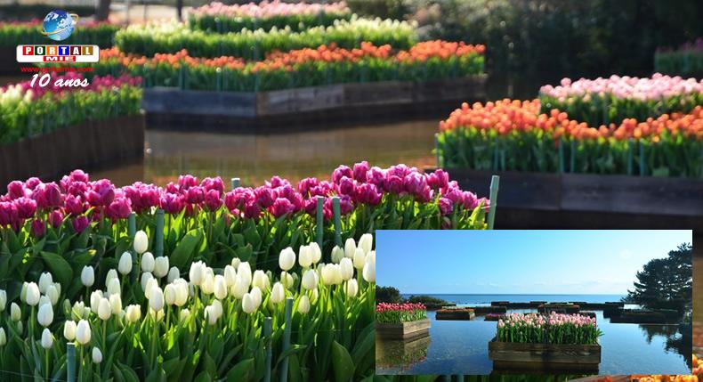&nbspTulipas estão no auge da floração em parque de Ibaraki