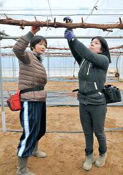 &nbspBrasileira vislumbra ser viticultora em Shimane