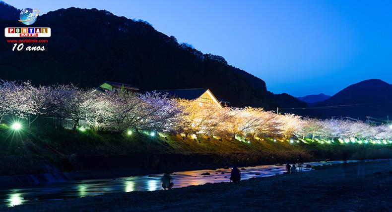 &nbspA beleza das flores no Festival de Sakura de Kawazu em Shizuoka