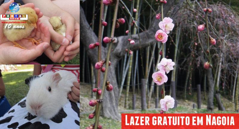 &nbspLazer gratuito: flores de ameixeiras no parque em Nagoia