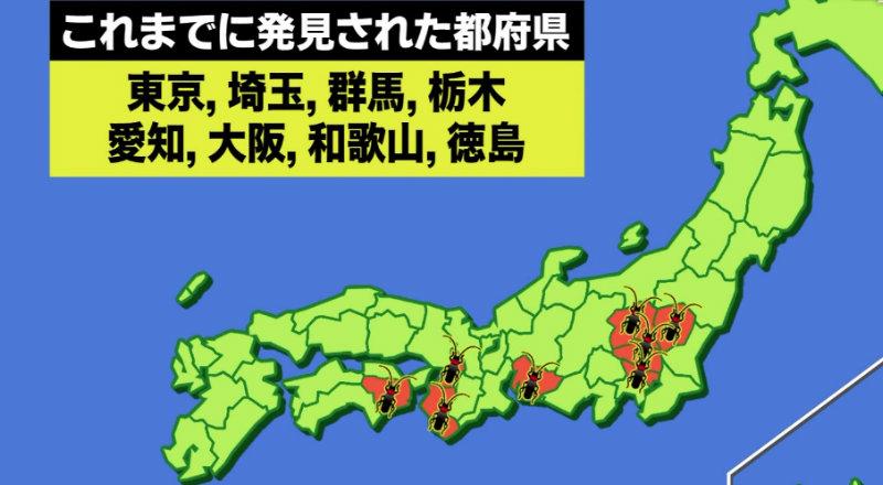 &nbspCerejeiras do Japão estão sob ameaça de inseto estrangeiro
