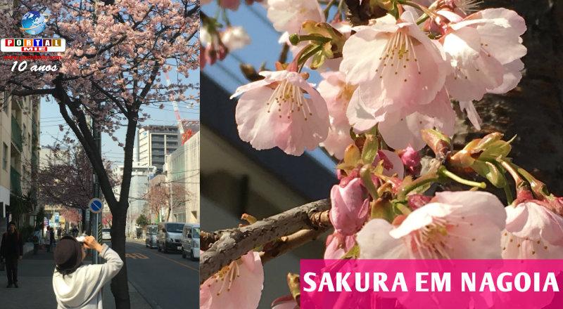 &nbspSakura em Nagoia: o primeiro lugar a florescer