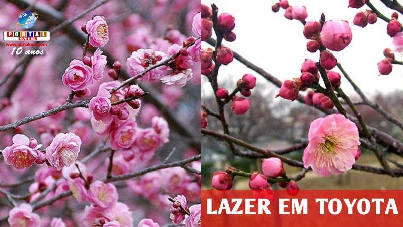 &nbspLazer gratuito em Toyota: flores aromáticas de ameixeiras
