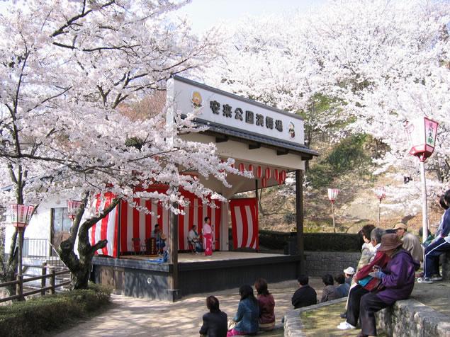 &nbspLocais para ver as flores de cerejeira em Shimane
