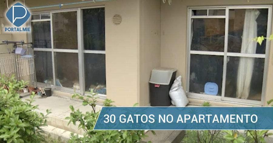&nbspAção de despejo para inquilina com 30 gatos