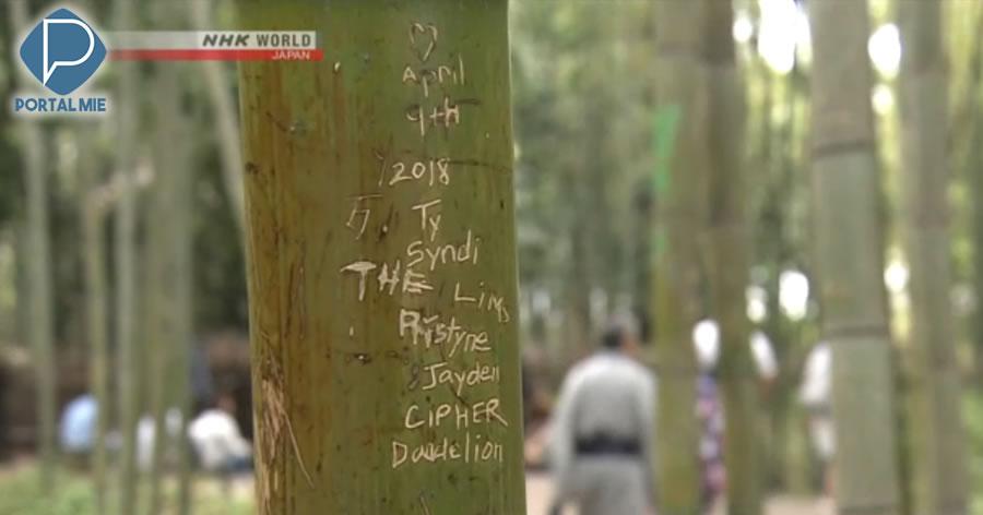 &nbspTuristas estragam vários bambus em famoso bosque de Quioto