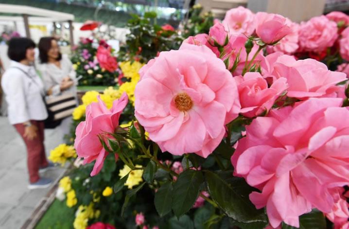 &nbspUm milhão de flores no International Roses and Gardening Show em Saitama