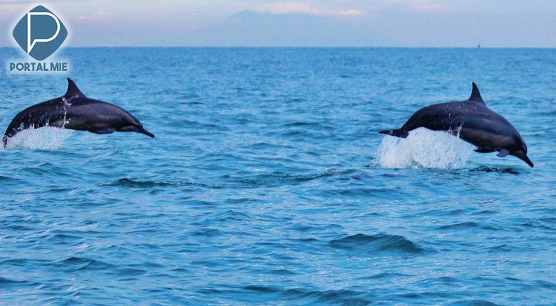 &nbspCruzeiro para ver golfinhos, em Toyama