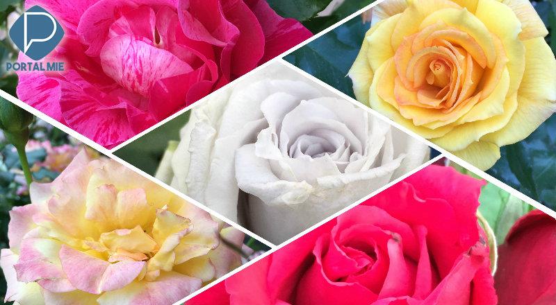 &nbspLazer gratuito: centenas de rosas no Flarie
