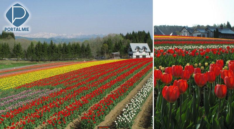 &nbspFazenda, parque de diversão e 200 mil tulipas ao mesmo tempo