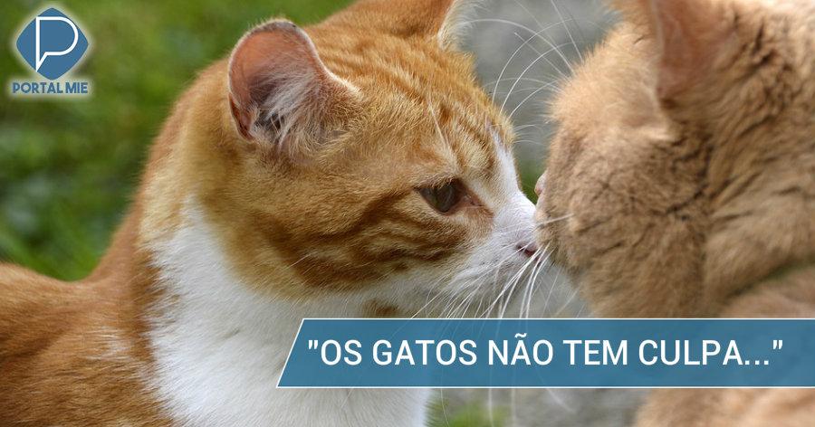 &nbspPrefeito de Nagoia declara que não irá sacrificar os 30 gatos
