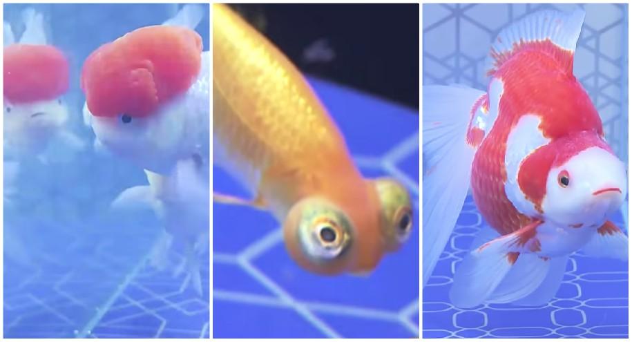 &nbspLazer refrescante com peixinhos decorativos