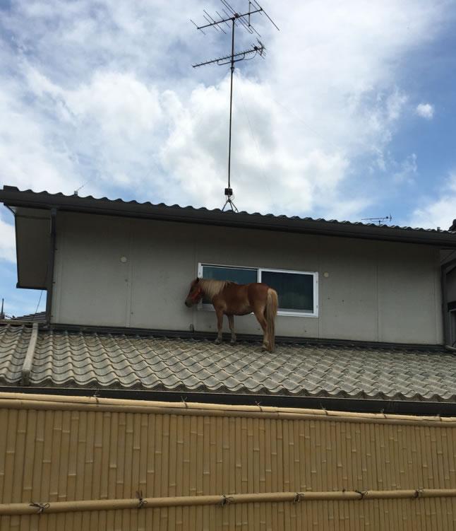 &nbspCavalo desaparecido é encontrado em telhado 3 dias após inundação