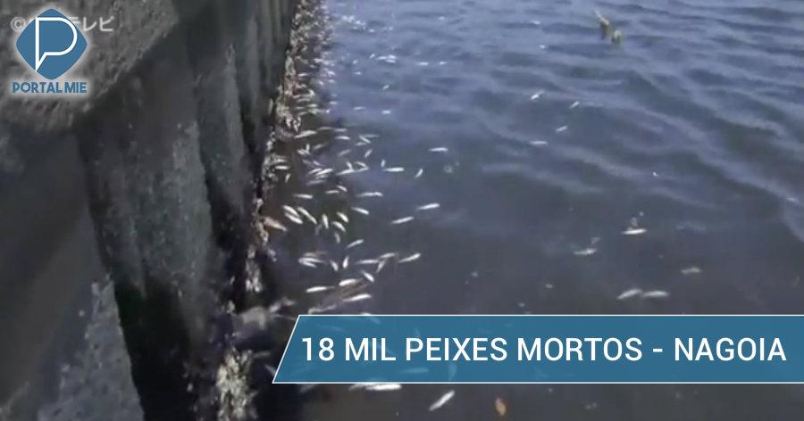 &nbspMilhares de tainhas mortas no rio em Nagoia