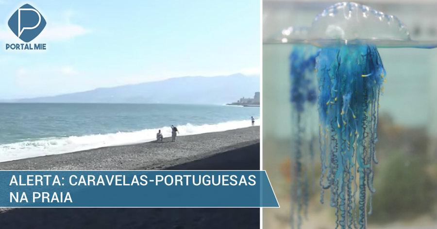 &nbspCuidado com as caravelas-portuguesas na praia em Kanagawa