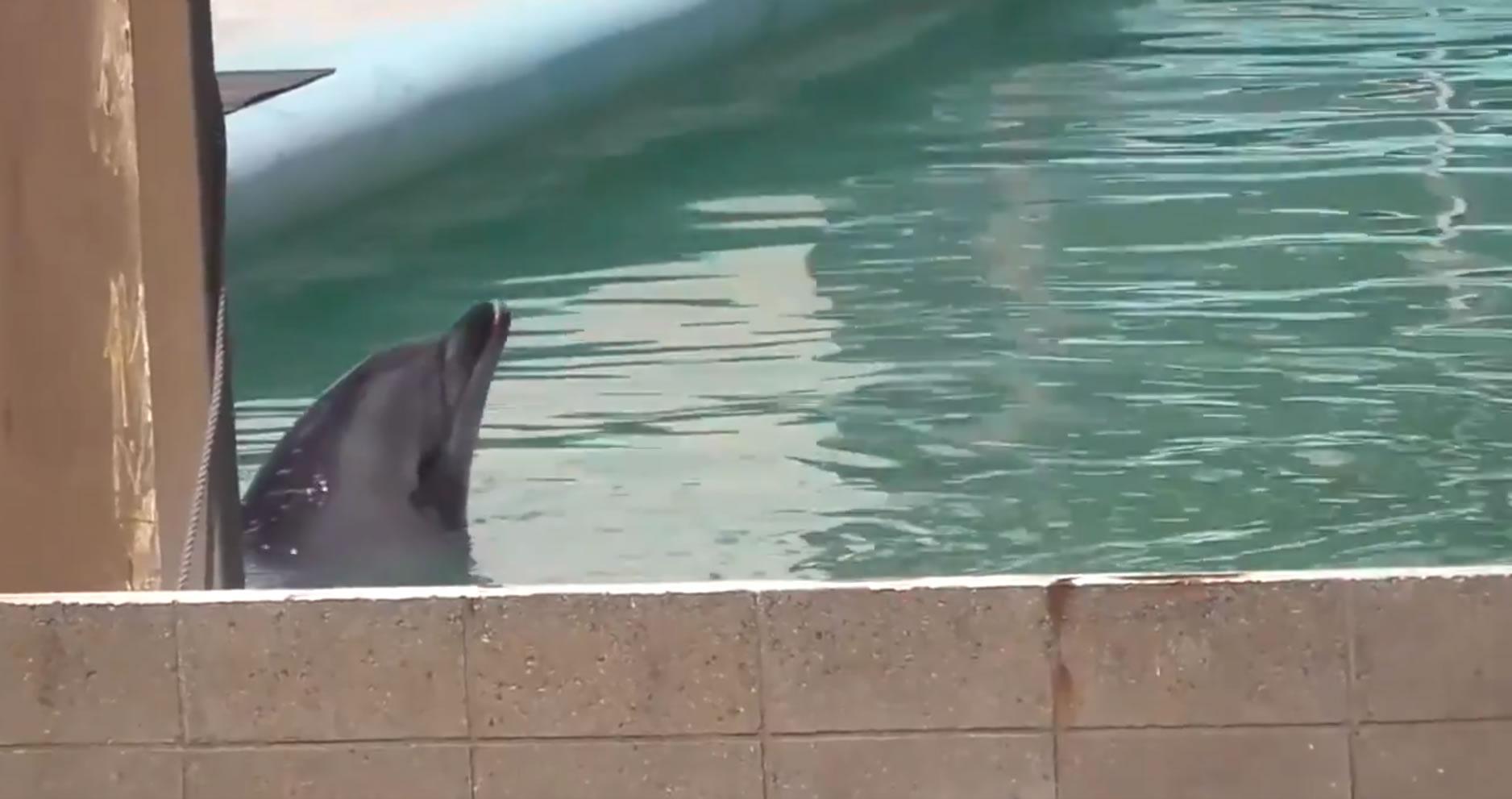 &nbspAbandono de golfinho e pinguins em aquário fechado desde janeiro gera protestos