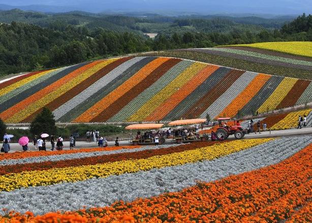 &nbspCarpete colorido de flores em jardim panorâmico no norte do Japão