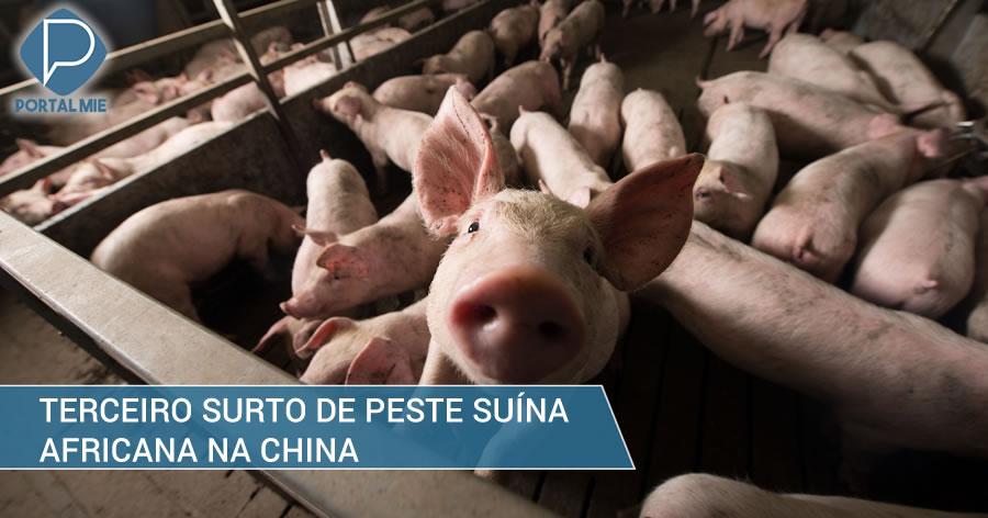 &nbspChina tem terceiro surto de peste suína africana